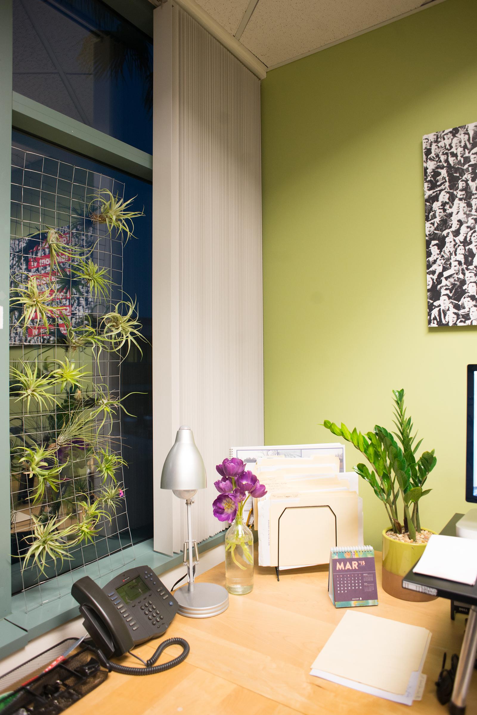 Plant Paradise: An Office Oasis - Hayneedle