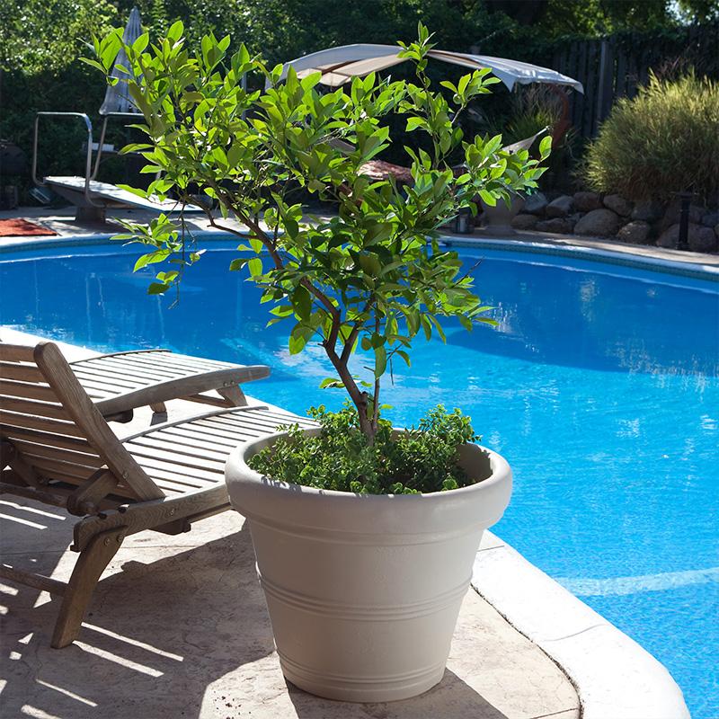 tree in garden planter