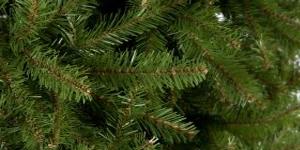 classic christmas tree needles