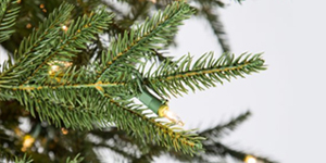 most realistic christmas tree needles