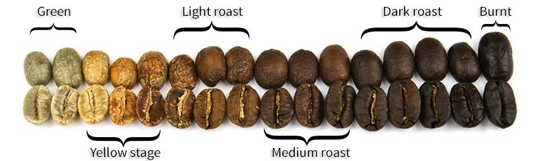 Line of coffee beans at different roast levels